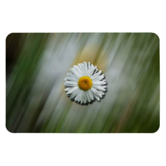 Daisy in a Hurry Magnet