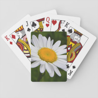 Daisy in Bloom Deck Of Cards