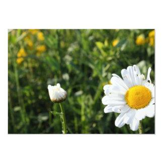 Daisy In Grass Card
