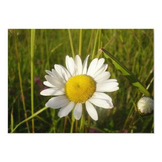 Daisy In The Field Card