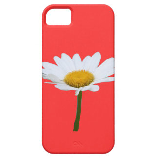 Daisy iPhone Case iPhone 5 Case
