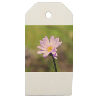 Daisy Lane Wooden Gift Tags