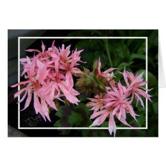 Daisy-like  Geranium Pink Card