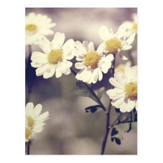 Daisy.Love Postcard
