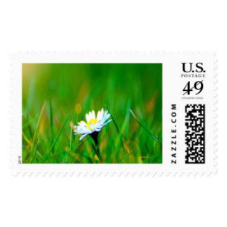 Daisy Magic Large Stamp