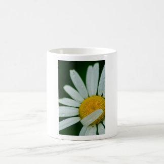 daisy magic mug
