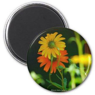 Daisy-Magnet magnet