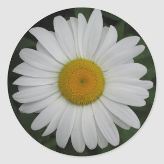 Daisy May Queen Close Classic Round Sticker