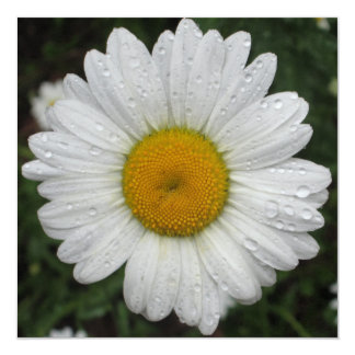 Daisy May Queen Water Card