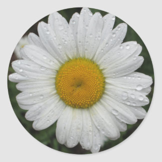 Daisy May Queen Water Classic Round Sticker