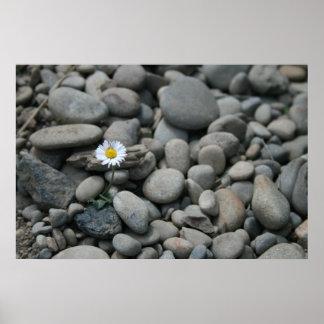 daisy n rocks print