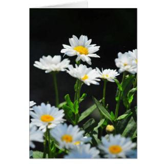 Daisy notecard cards