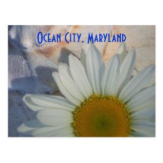 Daisy Ocean City Postcard