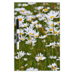 Daisy on a meadow Dry-Erase whiteboards