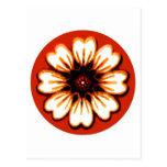 Daisy Orange The MUSEUM Zazzle Gifts Postcard