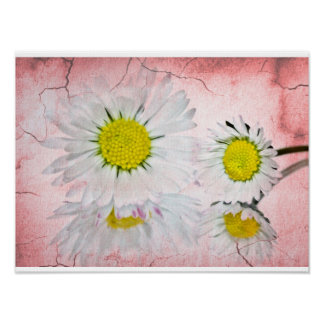 Daisy Pink  Blossoms Elegant Chic Mod Floral Poster