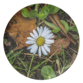 Daisy Plate original photography