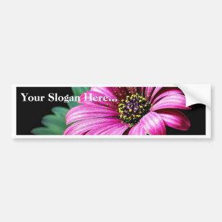 Daisy Pollen Bumper Sticker