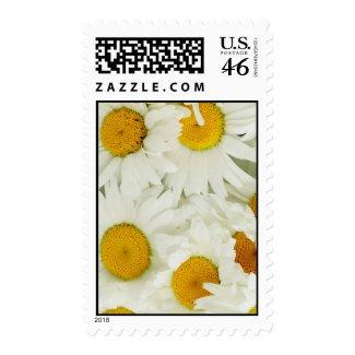 daisy stamp