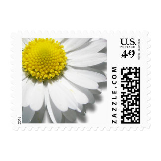 Daisy /Postage size small horizontal or vertical Stamp