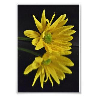 Daisy Reflection Photographic Print
