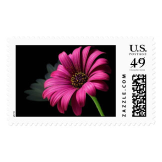 """Daisy Reflection"" Stamps"