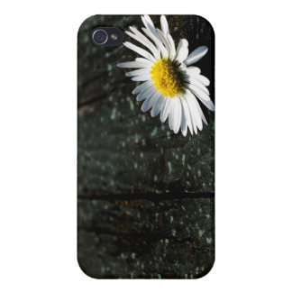 Daisy Resting on Old Wooden Planks Cover For iPhone 4