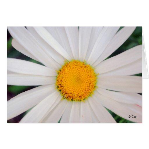 Daisy, S Cyr Greeting Cards