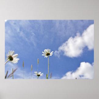 Daisy sky print