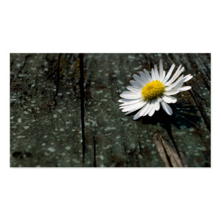 Daisy Solitude Double-Sided Standard Business Cards (Pack Of 100)