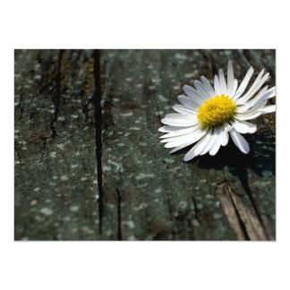 Daisy Solitude Card