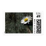 Daisy Solitude Stamp
