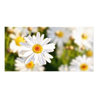 Daisy Spring Flowers Photo Card