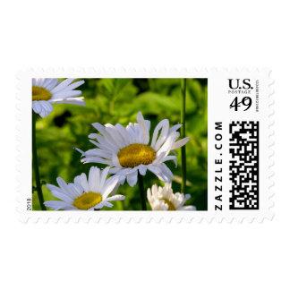 Daisy stamps fun colorful summer garden photo