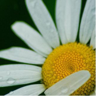 daisy statuette