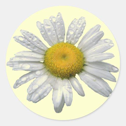 Daisy Round Sticker