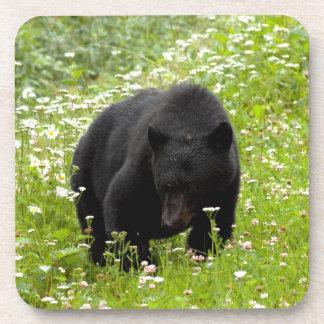Daisy The Black Bear; No Text Drink Coaster