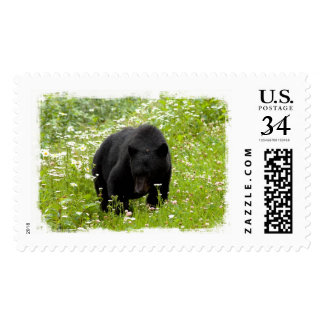 Daisy The Black Bear; No Text Postage Stamp