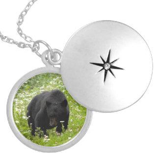 Daisy The Black Bear; No Text Round Locket Necklace