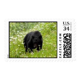 Daisy The Black Bear; No Text Stamp