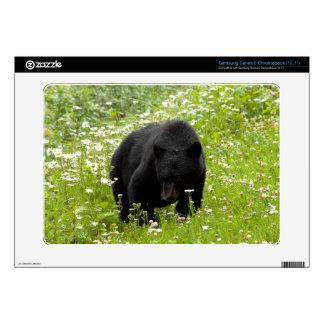 Daisy the Black Bear Samsung Chromebook Skin