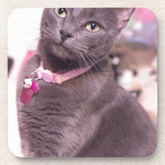 Daisy the Cat Beverage Coaster