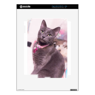 Daisy the Cat Decal For The iPad 2