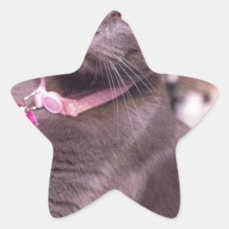 Daisy the Cat Star Sticker