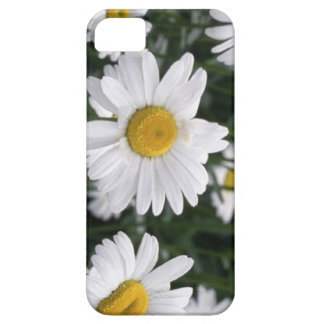 Daisy  the flower for 5th anniversary iPhone 5 cases