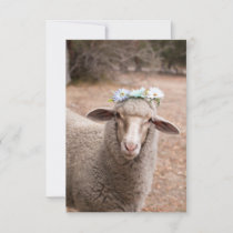 Daisy The Sheep RSVP Card