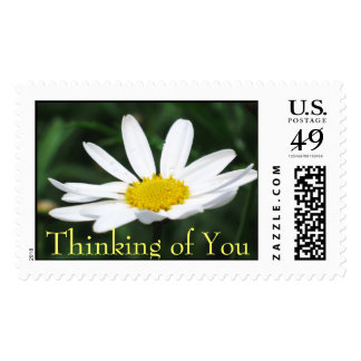Daisy Thinking of You Stamp