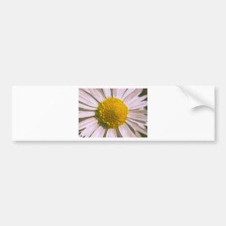 Daisy Watercolour Painting Bumper Sticker