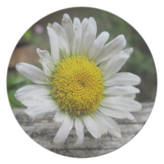 Daisy Weathered Flower Party Plates