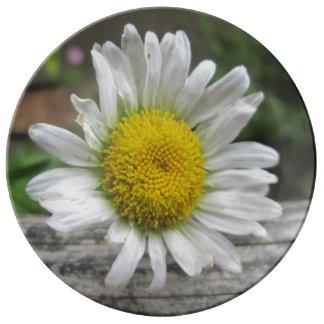 Daisy Weathered Flower Porcelain Plates